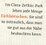zettel_eichhoernchen